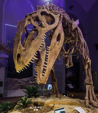 The Giganotosaurus