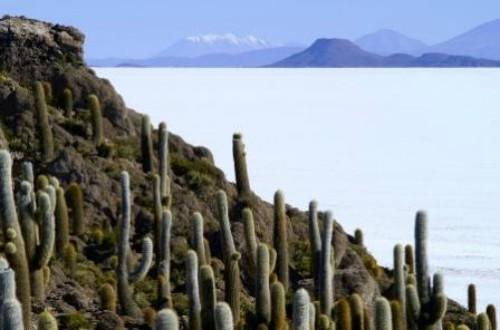 Salar de Uyuni Bolivia Cactus Gardens
