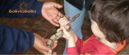 bolivia for kids rainforest boa