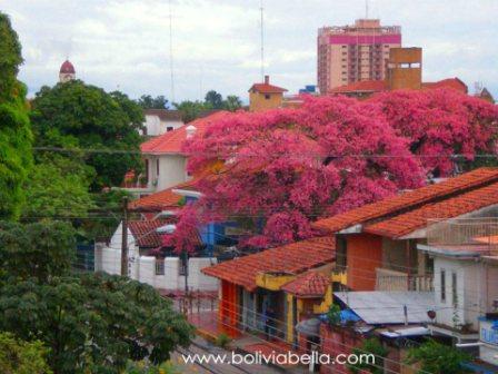 Toborochi Trees