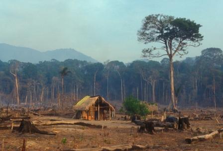 bolivia geography deforestation