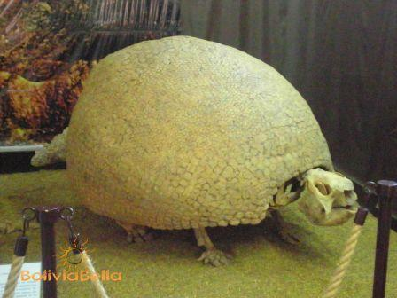 Paleontology and Archeology Museum of Tarija Bolivia