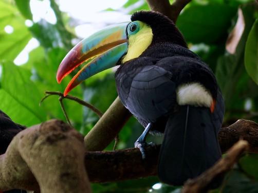 Parques Nacionales de Bolivia Reservas Areas Protegidas