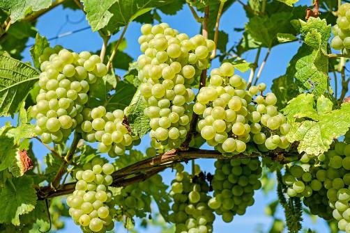 Samaipata Wine Tours - Ruta del Vino