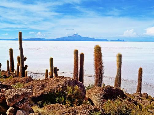 Incahuasi Island Salar de Uyuni Bolivia