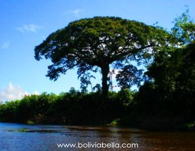 The Ibare River in Beni