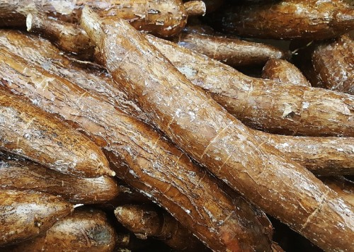 Bolivian Food and Recipes - Yucca Root