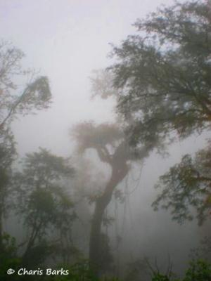 The rainforest in Bolivia