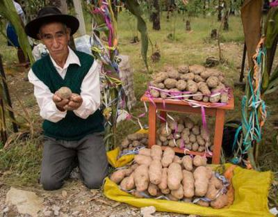 A Bolivian with his potatoes