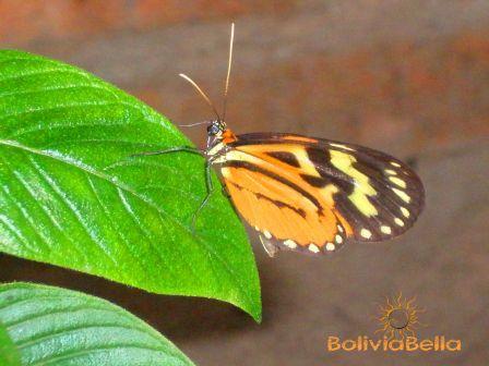 Taken at Güembé butterfly sanctuary and orchidarium