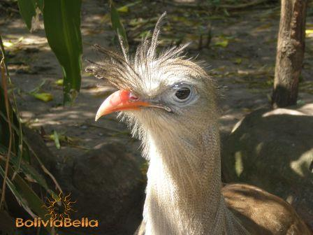 Meet my roadrunner friend at the Santa Cruz Zoo.