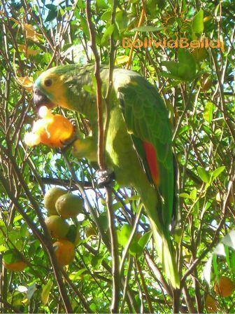 Meet Lorenzo. He lives in Isiporenda, in Guaraní territory near the Kaa Iya National Park.