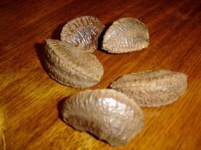 Brazil nut seeds