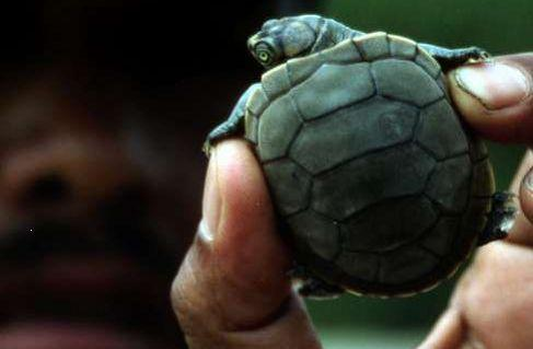 WWF Bolivia