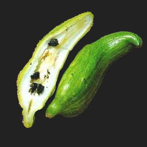 This is achojcha. You can also use zucchini or okra.