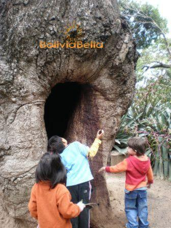 bolivia for kids rainforest toborochi tree