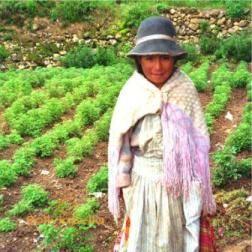 b84212b43924a Bolivian Clothing. Bolivia Clothes