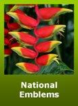 Bolivian National Emblems and Symbols