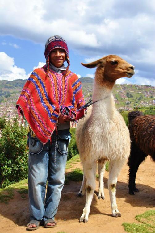 Bolivian National Emblems - National Animal - Llama