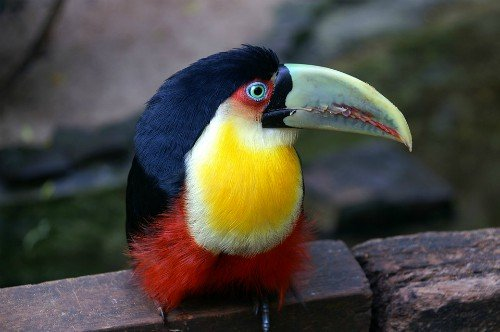 Things to do in Santa Cruz, Bolivia - Zoo