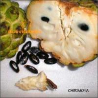 bolivian food fruit chirimoya
