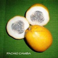 bolivian food fruit pachio camba