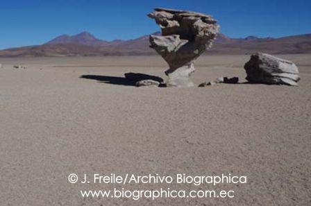 Arbol de piedra (stone tree) Potosí, Bolivia