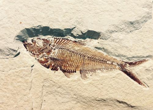 Paleontology Museum Tarija Bolivia Tourism