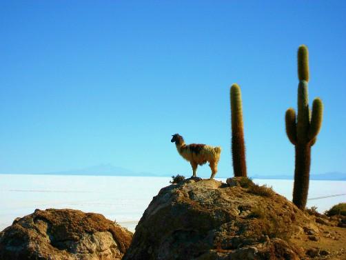 Salar de Uyuni Bolivia Salt Desert