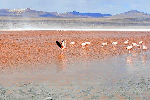 Salar de Uyuni Bolivia Flamingos