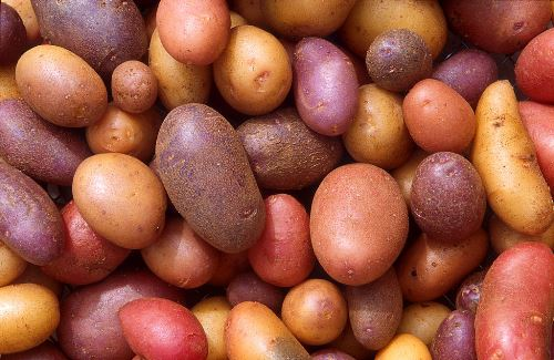 Bolivian Myths: Legend of the Potato