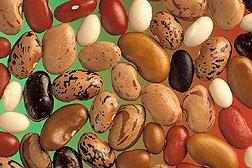 In Bolivia porotos are beans