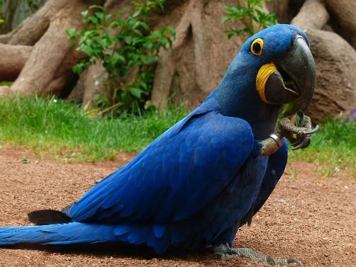 Wildlife in Bolivia - WWF - World Wildlife Federation